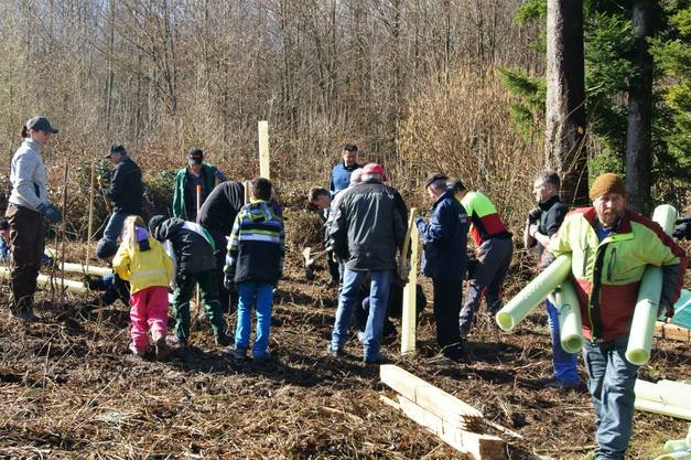 Eine Gruppe Freiwilliger pflanzte rund 550 Jungbäume und schützte sie vor Wildschäden.