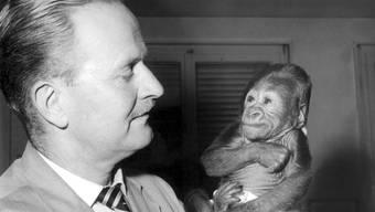 Der Affe, der Mensch sein musste: Gorilla-Dame Goma ist im Basler Zoo gestorben