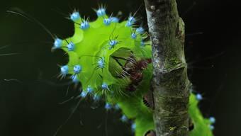 """Thomas Marent: """"die schönsten Insekten der Schweiz"""""""