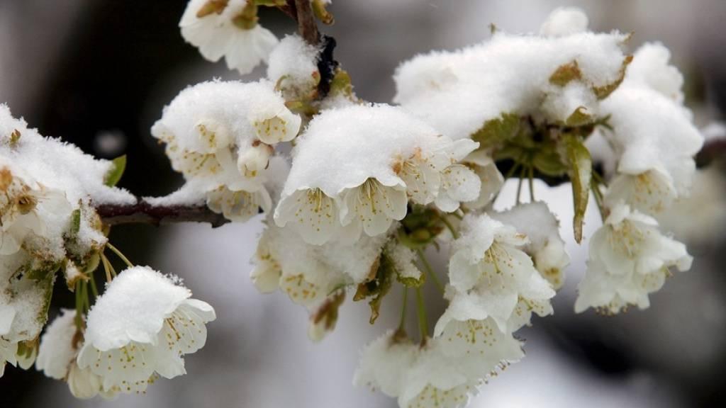 Einen so kalten April gab es seit 20 Jahren nicht mehr