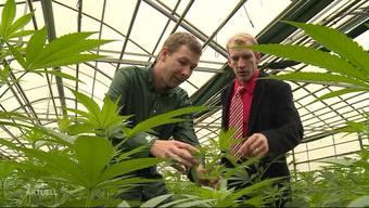 Dario Tobler und Jan Hug setzten sich für die Legalisierung  von Cannabis ein und gründeten dafür die Schweizerische Hanfpartei. Nun kandidieren die Hanfbauern aus dem Kanton Solothurn für den Nationalrat. Zudem plant die Partei weitere kantonale Sektionen zu lancieren.