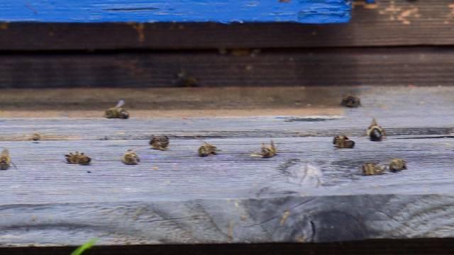 Bienen an Pestizid gestorben?
