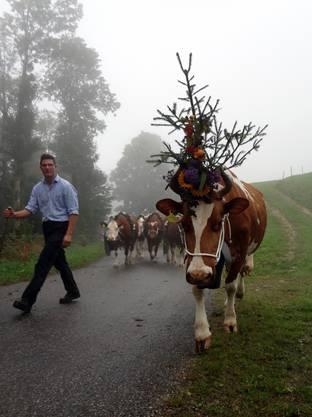 Beat Lisser, Mittler Passwang, dreht mit den geschmückten Kühen eine Ehrenrunde zum Schauplatz, von wo die Kühe eigentlich kommen.