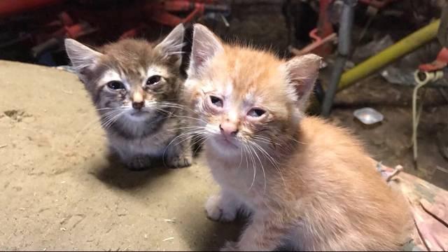 Zwangskastration für Katzen?