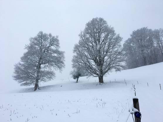 Wintertag auf Herteren