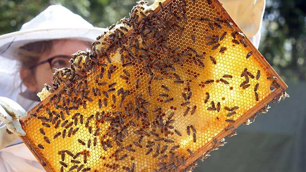 Uri besonders stark von Bienenseuchen betroffen