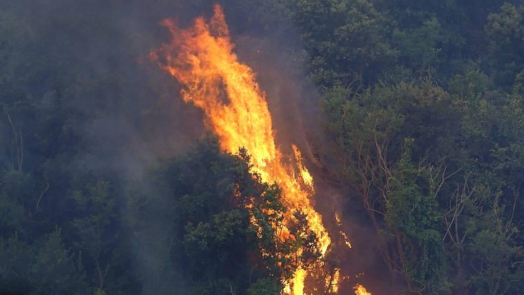 Bäume stehen in Flammen. Hunderte von Menschen in vielen kleinen Städten auf Sardinien wurden aus ihren Häusern in Sicherheit gebracht. Foto: Alessandro Tocco/LaPresse/AP/dpa