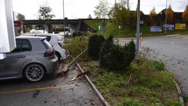 Der Lenker des Personenwagens riss einen Baum zu Boden.