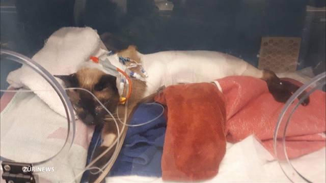 """Hat ein defektes Spital-Heizkissen Katze """"Fränzi"""" getötet?"""