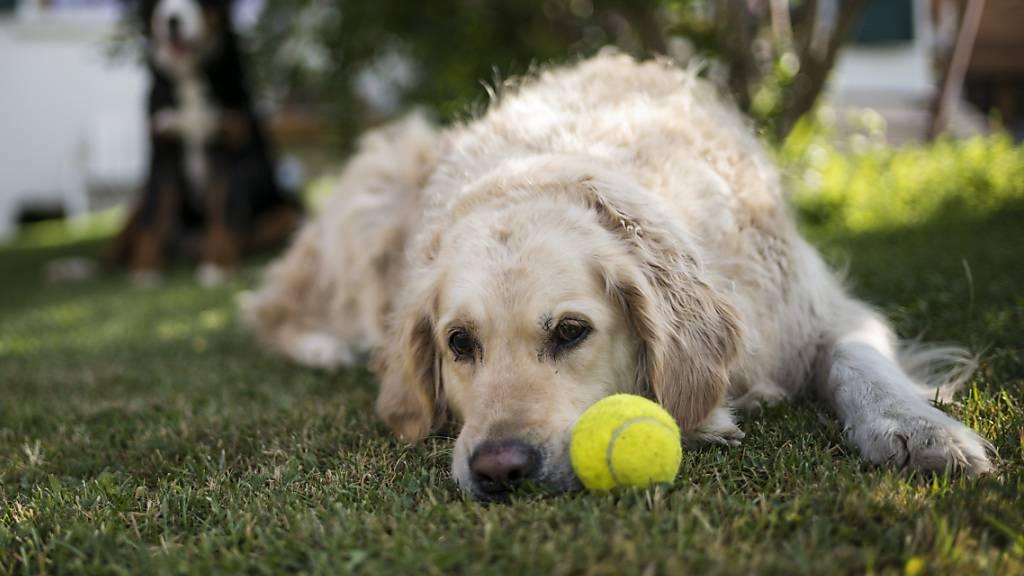 Hunde erwidern Grosszügigkeit von Menschen nicht