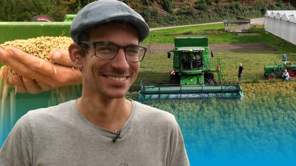 Aargauer Risottoreis «Loto» – erfolgreiche Ernte