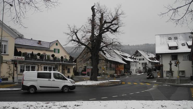 Unter dieser Linde in Weiningen sollen Gerüchte zufolge Weinflaschen vergraben sein.