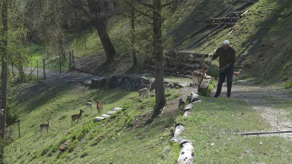 Kompromis: «Stopp-dem-Tierleid» kommt nicht vors Volk
