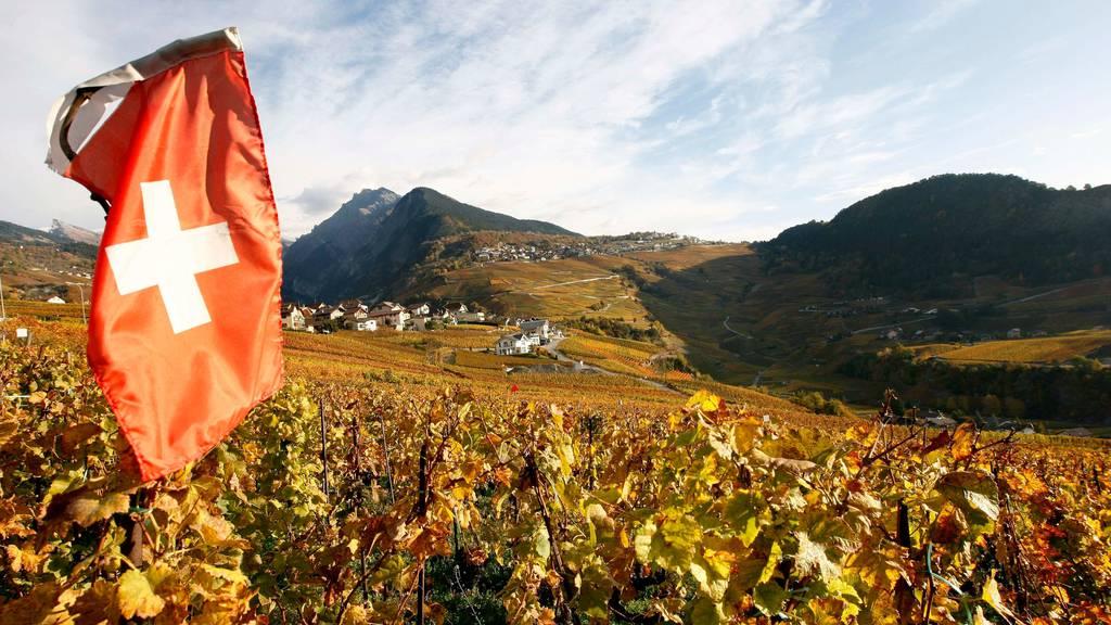 Wallis will Weinbau mit zwei Millionen Franken unterstützen