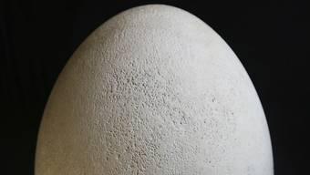 Ei-nsam im Lager vergessen: Eine Museumsmitarbeiterin fand dieses rund 30 Zentimeter grosse Ei eines Elefantenvogels.