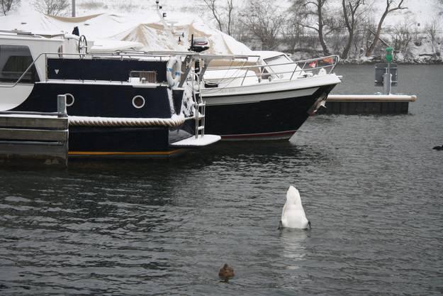 Eisberge im Bootshafen Solothurn