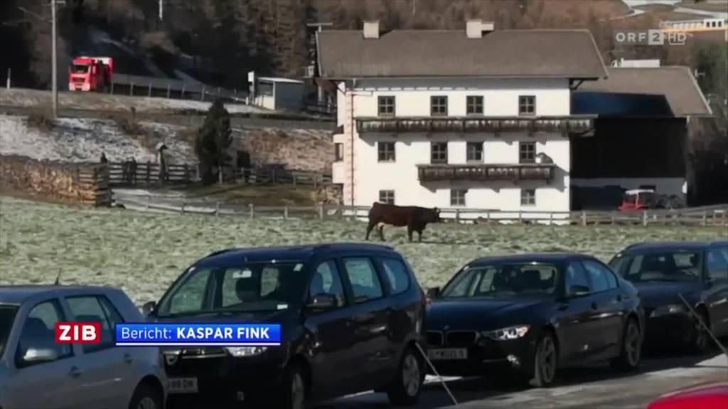 Polizei-Sondereinheit tötet Kuh mit sieben Schüssen