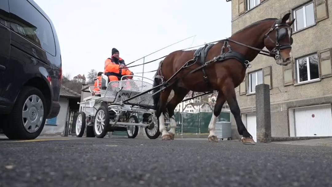 Pferdekutsche sammelt in Freiburg alte Weihnachtsbäume ein