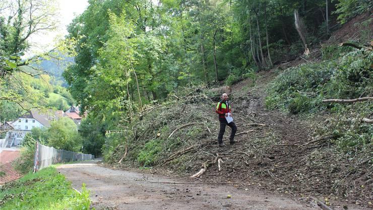 Oberhalb der Strasse «Cholhalde» hat das Team von Martin Blattner diese Woche zahlreiche Bäume gefällt.