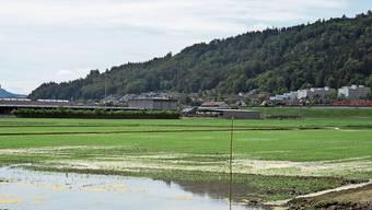 Das Reisfeld in Lauffohr wird nur temporär geflutet. Wie sich das aufs Klima auswirkt, wird noch erforscht.