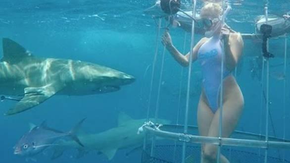 Zum Heulen: Pornodarstellerin wird bei Videodreh vom Hai gebissen