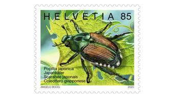 Dank Briefmarke sollen Herr und Frau Schweizer den Japankäfer besser erkennen. Die Popillia japonica breiten sich seit rund 100 Jahren aus.