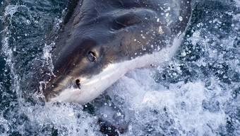 Tödliche Angriffe durch Haie sind selten (Symbolbild)