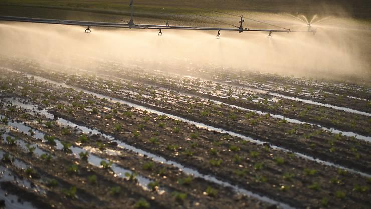 Wegen der anhaltenden Trockenheit müssen quer durch die Schweiz die Felder künstlich bewässert werden. (Symbolbild)