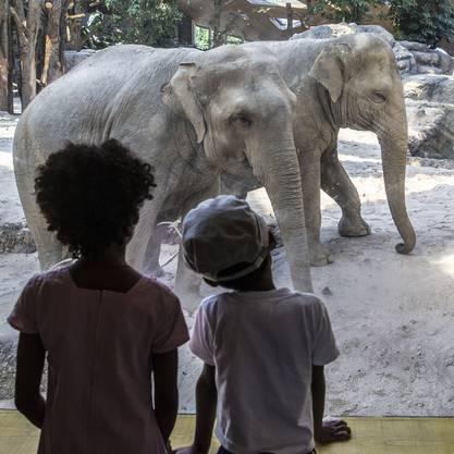 Zuschauerandrang am ersten Wochenende im neuen Elefantenpark des Zürcher Zoos.