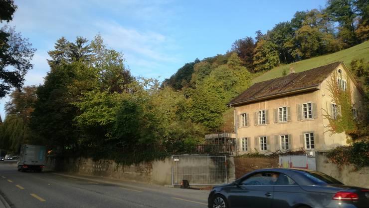 Am 4. Oktober werden die Bäume neben der Liegenschaft Baslerstrasse 32 in Bruggvom Forstbetrieb gefällt, weil hier eine Überbbauung entsteht.