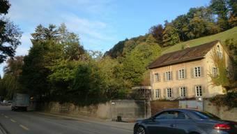 Bäume an der Baslerstrasse in Brugg