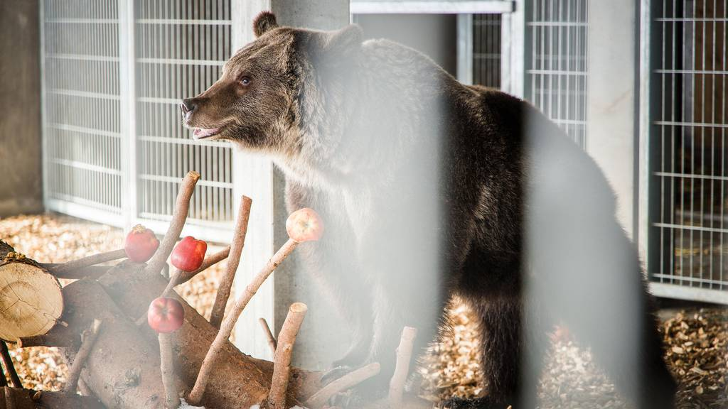 Erste Schritte nach langer Reise: Jambolina ist im Bärenland angekommen