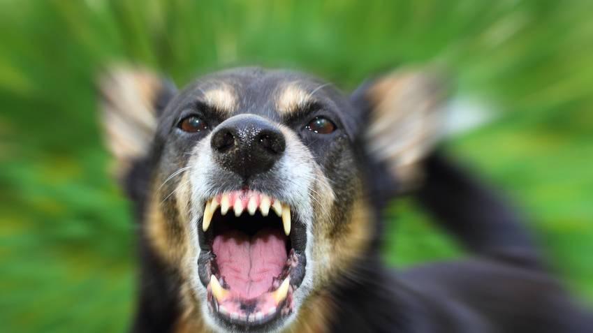 Bissiger Hund mit Messer angegriffen