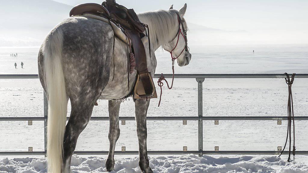 Laut dem Bundesgericht gilt ein Pferd als ein «im häuslichen Bereich» gehaltenes Tier, selbst wenn es in einiger Distanz vom Wohnort des Halters lebt. (Archivbild)