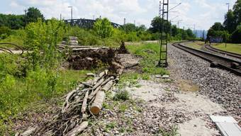 Für die für den Bau des trimodalen Terminal Basel Nord beanspruchte geschützte Trockenwiese muss ein Ersatzstandort gefunden werden.