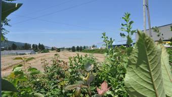 Das Gebiet Niderfeld in Dietikon. Blick von der Güterstrasse bei den Bahngleisen..jpg