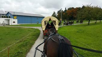 Olma Pferde-Trail nach St. Gallen