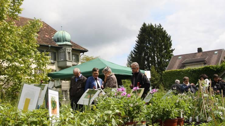 Auch im Klostergarten gibts viel zu entdecken.