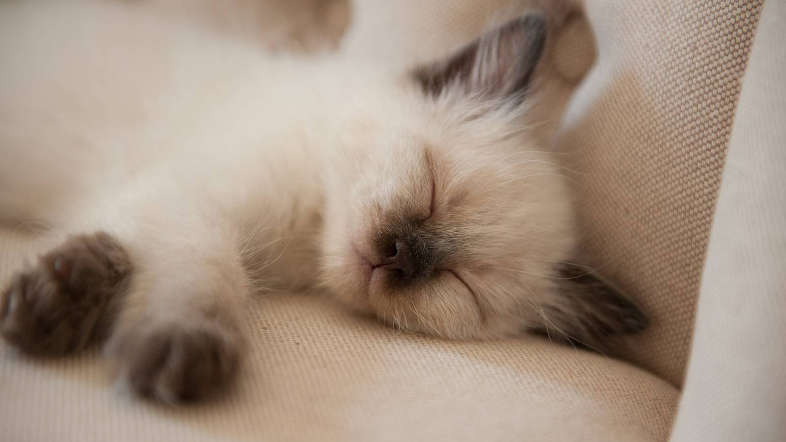 Katze (© Pixabay)