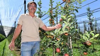 André Erni aus Stüsslingen hat seine Obstbäume über Vernebler bewässert. Besonders Jungbäume hätten sonst im regenarmen Juli einen schweren Stand gehabt.