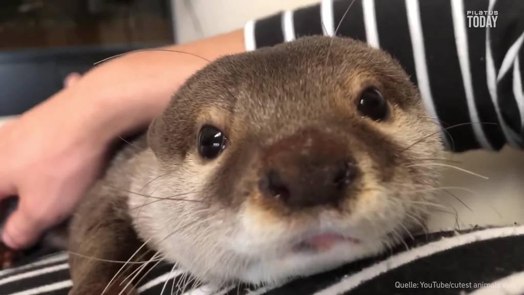 Welt-Otter-Tag: 7 Fakten über die putzigen Tierchen