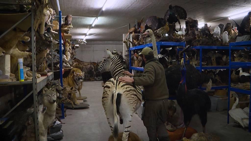 Tiere exotisch: Walter und die toten Tiere
