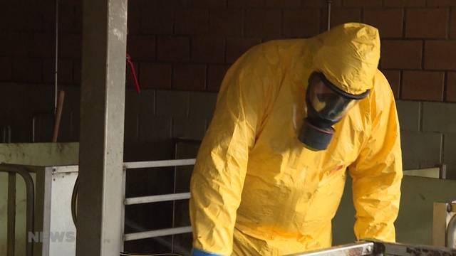 Afrikanische Schweinepest: Seuchen-Notfallübung auf Bauernhof