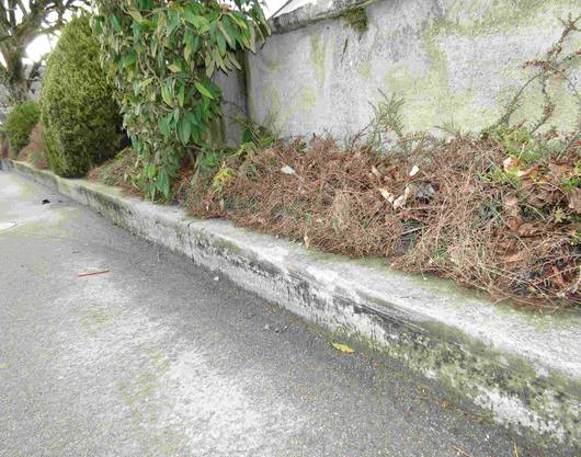 ... worauf sie über eine Blumenrabatte gegen die Mauer des Kirchenareals fuhr.
