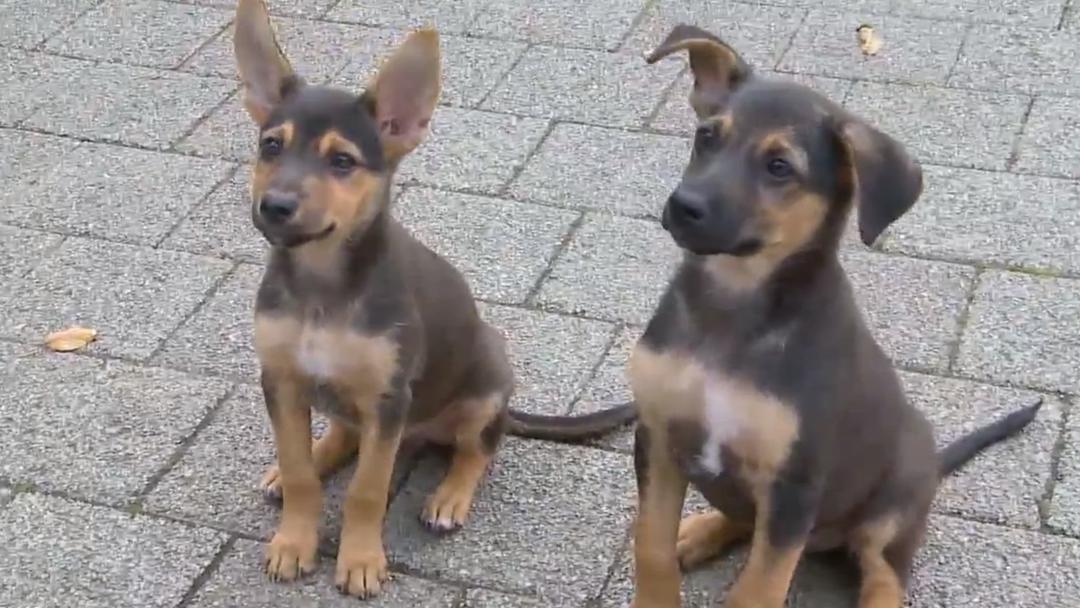Hundewelpen in Winterthur ausgesetzt