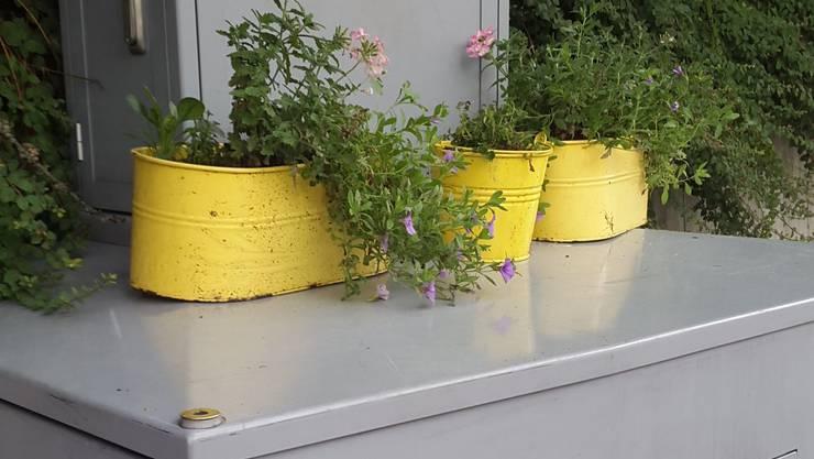 Eine Anwohnerin hat drei Blumentöpfe auf die Radarfalle gestellt ...