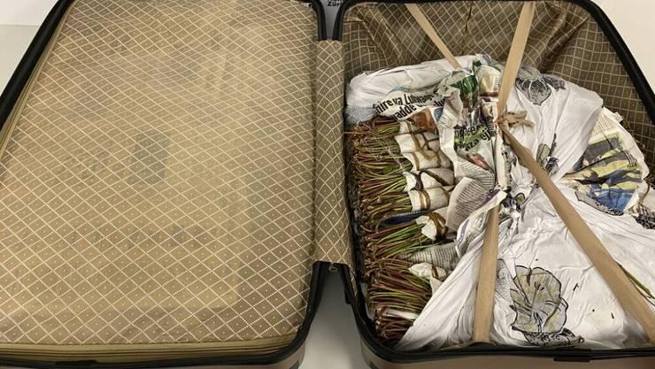 Mit 40 Kilogramm Khat-Blättern wollte ein Niederländer in die Schweiz einreisen. Am Flughafen Zürich wurde er verhaftet.