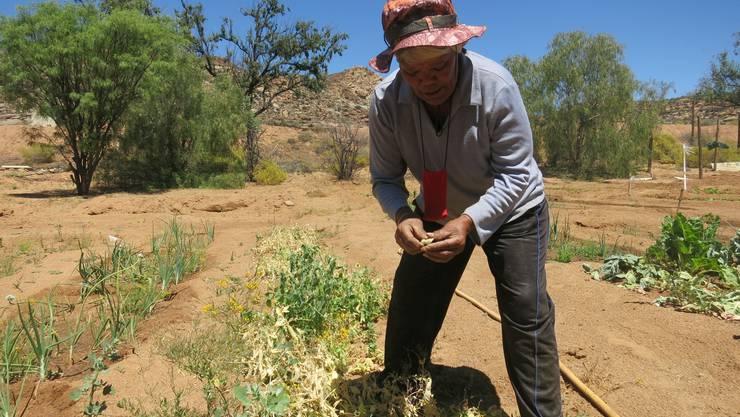 Fastenopfer unterstützt unter anderem landwirtschaftliche Projekte in Südafrika.