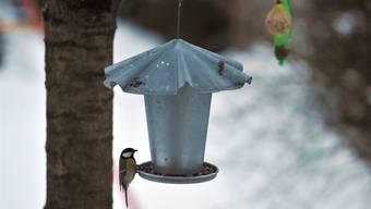 Singvögel leben in der Schweiz meist sicherer als im Mittelmeerraum.