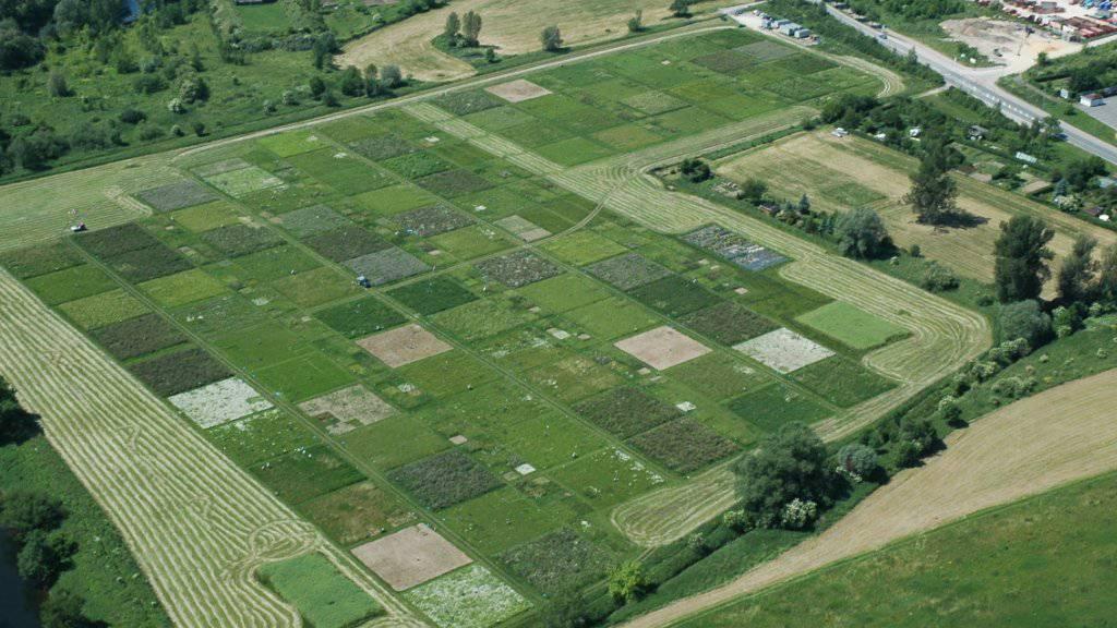 In die Studie flossen Daten aus über 40 Graslandexperimenten - wie diesem in Jena - ein. (Foto: Handout)